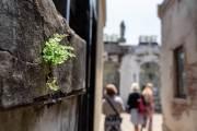 Der Friedhof la Recoleta