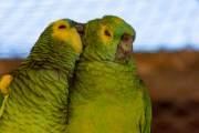 Papageien, hier leider im Käfig