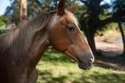 Zum Frühstück kommen uns Pferde besuchen