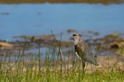 Vogel an der Laguna la Salada