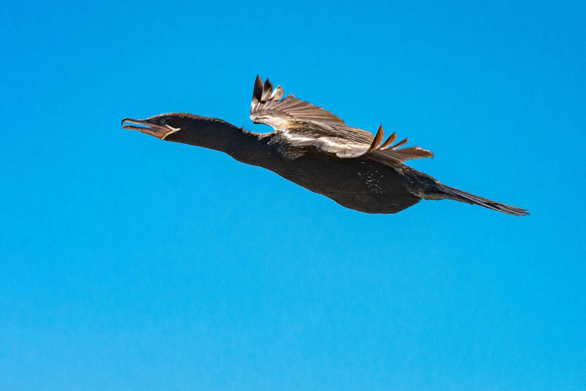 Vogel bei Punta Norte im Norden der Peninsula Valdes