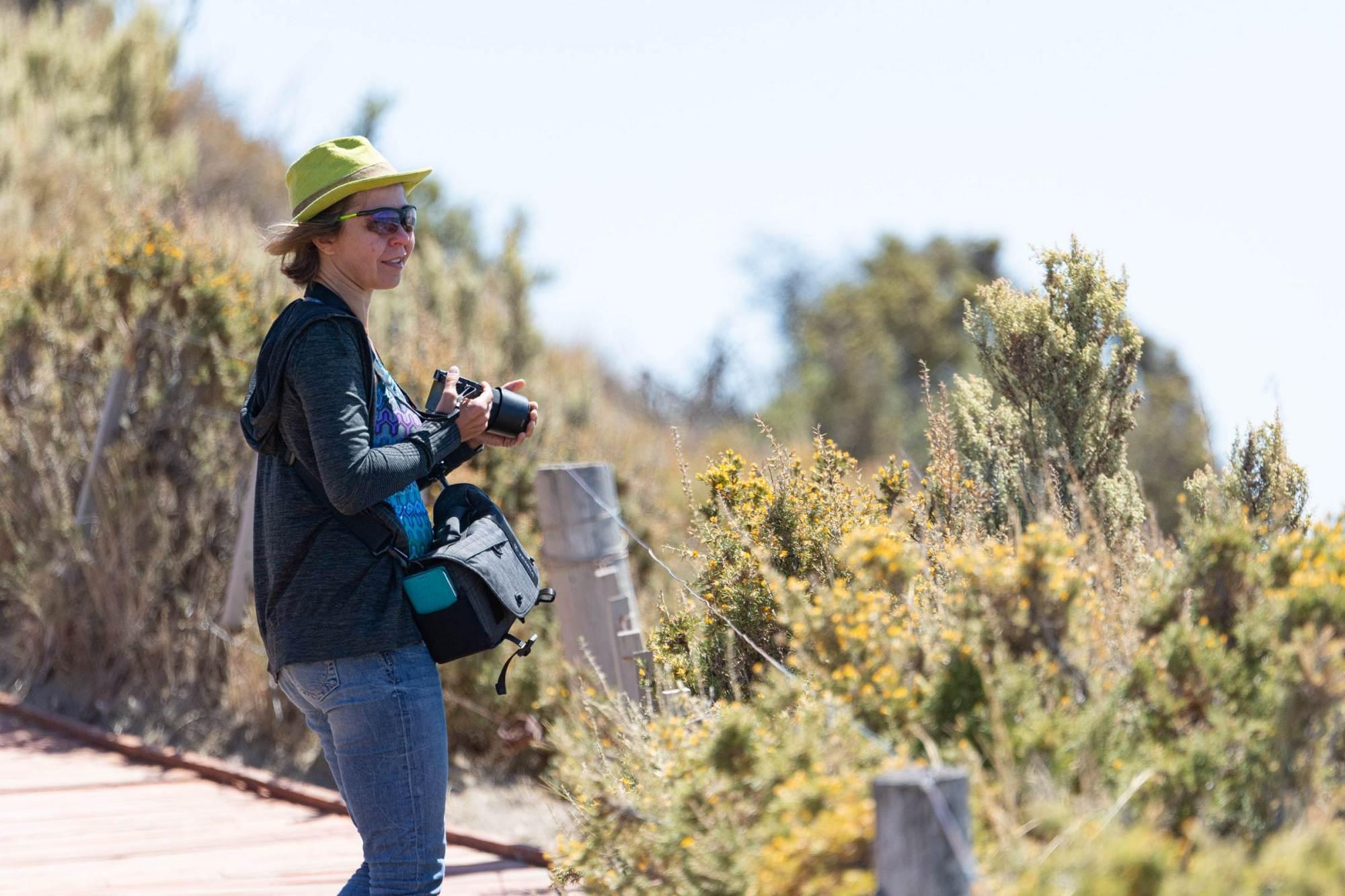 Beim Fotografieren der Seelöwen