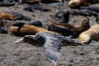Vogel bei Punta Norte