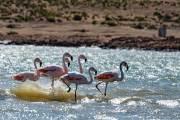 Am morgen sind einige Flamingos nahe unserem Übernachtungsplatz