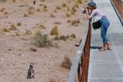 Magellanpinguin am Cabo dos Bahias
