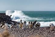 Magellanpinguine am Cabo dos Bahias