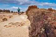 versteinerte Bäume von Jaramilo