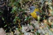 Auch viele Vogelarten sind in Pali Aike anzutreffen