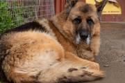 Der Hund bewacht das Restaurant La Sirena Y El Capitán