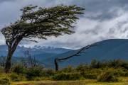 Die für die Gegend typischen vom Wind geformten Bäume