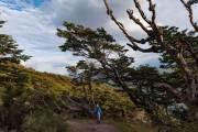 Wald an der Küste des Beagle Kanals