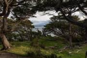 Urwald an der Küste