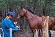 Ezequiel macht die Pferde fertig
