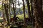 Ezequiel treibt einige seiner Pferde zusammen