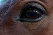 Delphine spiegelt sich im Auge des Pferdes