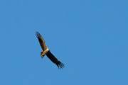 Unser erster Condor