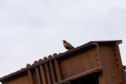 Auch hier gibt es viele Vögel zu sehen